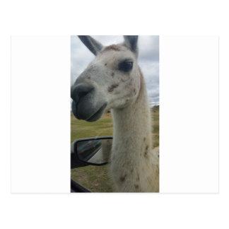 Llama Postal