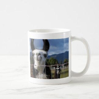Llama sonriente divertida en Oregon meridional