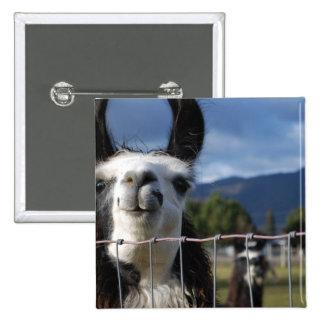 Llama sonriente divertida en Oregon meridional Pin