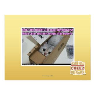 Llamada 1-800-LOLCATS Postal