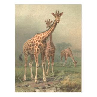 Llanos del africano de la impresión de la jirafa postal