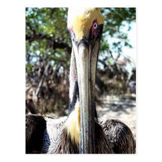 Llave del refugio de aves del pelícano largo, post postal