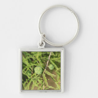Llavero Cono de la semilla de Cypress calvo