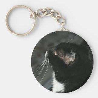 Llavero curioso del gato