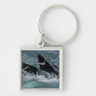 Llavero de la ballena jorobada