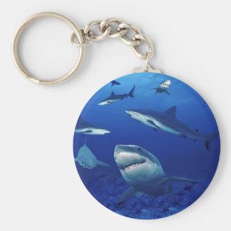Llavero de los tiburones