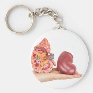 Llavero Mano plana que muestra el riñón humano modelo