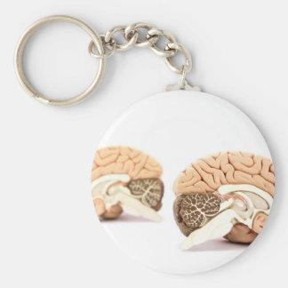 Llavero Modelo de los cerebros humanos aislado en el fondo