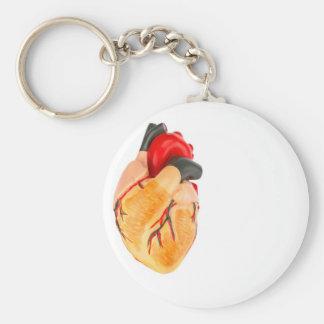 Llavero Modelo humano del corazón en el fondo blanco