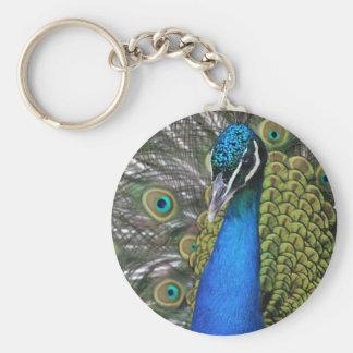 Llavero Plumas azules y verdes brillantes del pavo real w