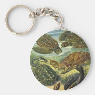 Llavero Tortuga de la tierra de las tortugas de mar del