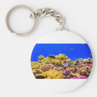Llavero Un arrecife de coral en el Mar Rojo cerca de