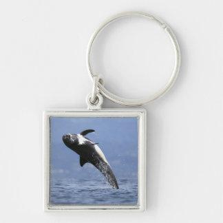 Llavero Un delfín de Risso