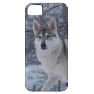 Lobo del invierno funda para iPhone SE/5/5s
