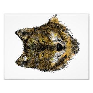 Lobo en color - impresión de la foto