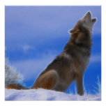 Lobo gris en peligro grito solo poster