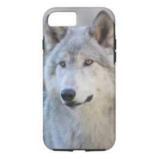 Lobo gris funda iPhone 7
