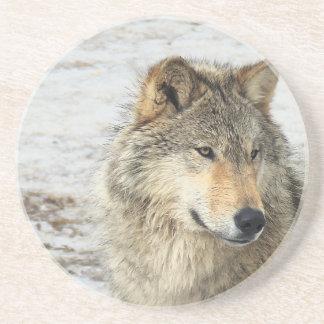 Lobo gris posavasos de arenisca