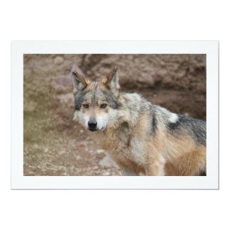 Lobo mexicano invitación 12,7 x 17,8 cm