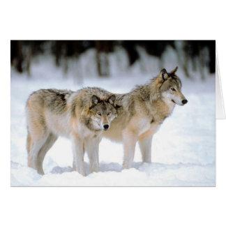 Lobos en la tarjeta del desierto