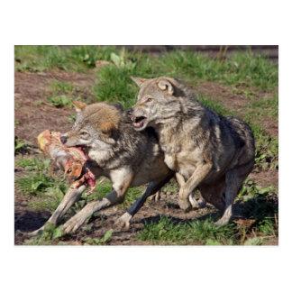 lobos postal