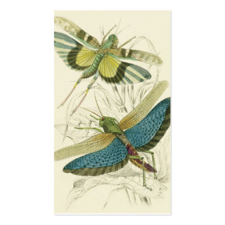 Locusta Cristata (más bajo), flava del Locusta (su Tarjetas De Visita