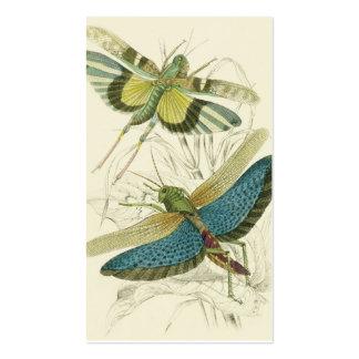 Locusta Cristata más bajo flava del Locusta su Tarjetas De Visita