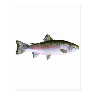 Logotipo de la pesca de la trucha arco iris de la postal
