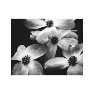 Lona blanco y negro de la flor del Dogwood Lienzo