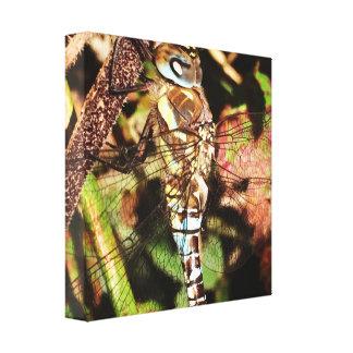 Lona de la libélula lienzo