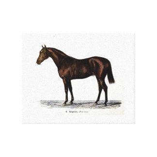Lona del caballo del siglo XIX Lienzo