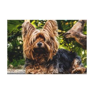 Lona del perro de Yorkie Impresión En Lienzo