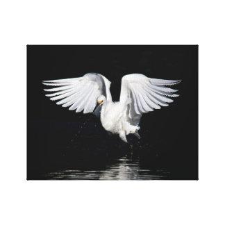 Lona envuelta - alas del egret nevado lienzo