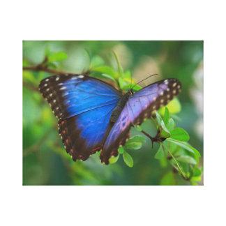 Lona estirada Morpho azul Lienzo