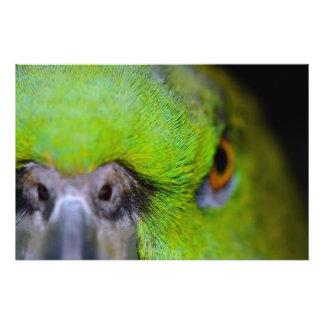 Loro Amarillo-Naped del Amazonas de Shirley Taylor Arte Fotografico