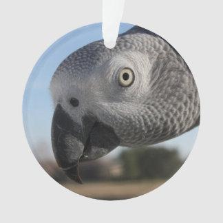Loro curioso del gris africano de Congo