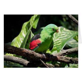 Loro de alas rojas en el miembro de árbol tarjeta