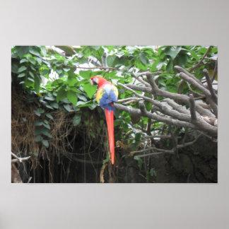 Loro de la selva tropical póster