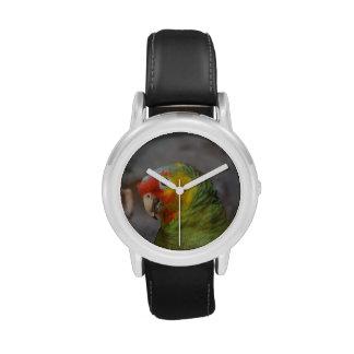 Loro del Amazonas Relojes
