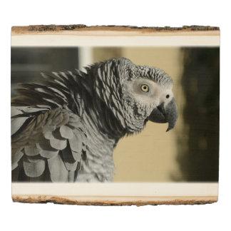 Loro del gris africano de Congo con las plumas Panel De Madera