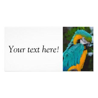 Loro del Macaw Tarjetas Personales