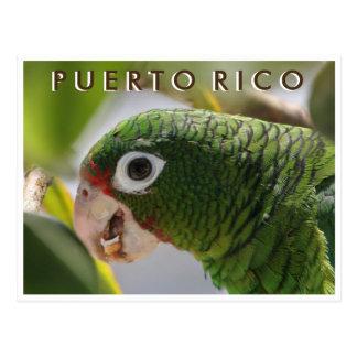 Loro puertorriqueño postal