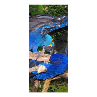 Loros azules del macaw que luchan la imagen de la  folleto publicitario 10 x 22,8 cm