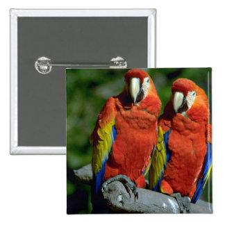 Loros del Amazonas Pins