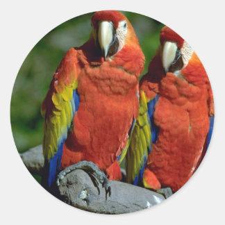 Loros del Amazonas Etiquetas Redondas