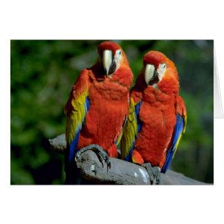 Loros del Amazonas Tarjeta De Felicitación