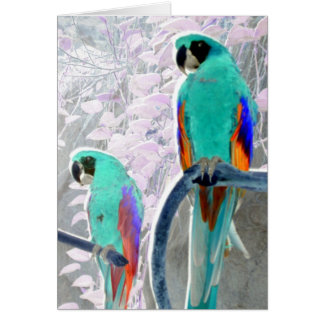 Loros del hielo tarjeta