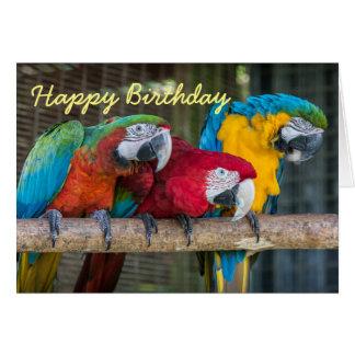 Loros del Macaw de la tarjeta de cumpleaños tres