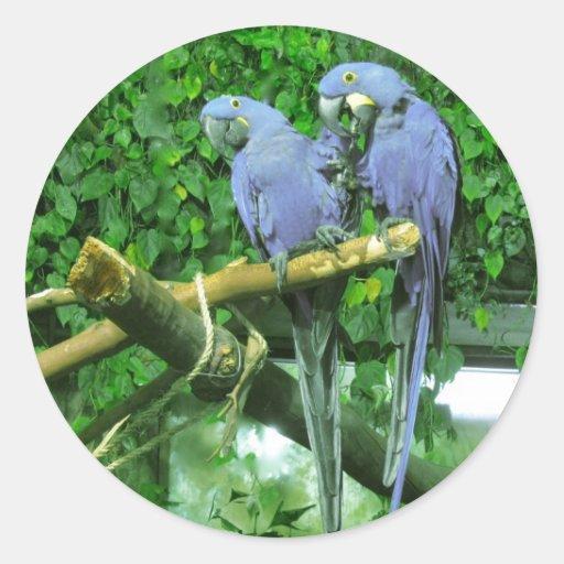 Loros gemelos azules pegatina redonda