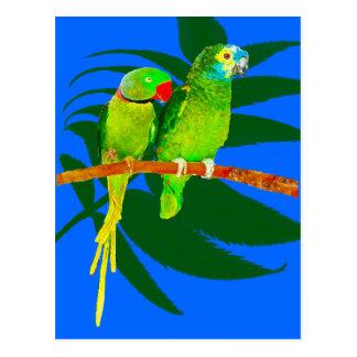 Loros verdes en azul postal